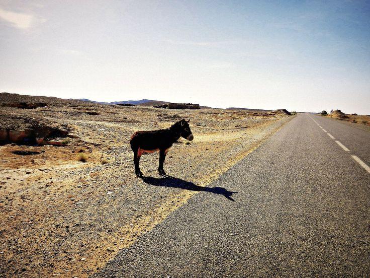 5 fotografische Eselsbrücken, die mir geholfen haben eine bessere Fotografin zu werden.