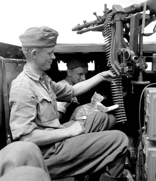 straengely: bag-of-sporco: Un soldato della Wehrmacht tedesca di Panzergrenadier-Division Großdeutschland lascia un gattino giocare con la cintura di un magazine MG-34 rinculo-gestito, raffreddato ad aria mitragliatrice nel vano di una Hanomag corazzato Sd.Kfz .  251 veicoli a metà pista durante la prima battaglia di Voronezh.  Vicino Voronezh, Voronezh Oblast, Russia, Unione Sovietica.  16 luglio 1942. che è così carino