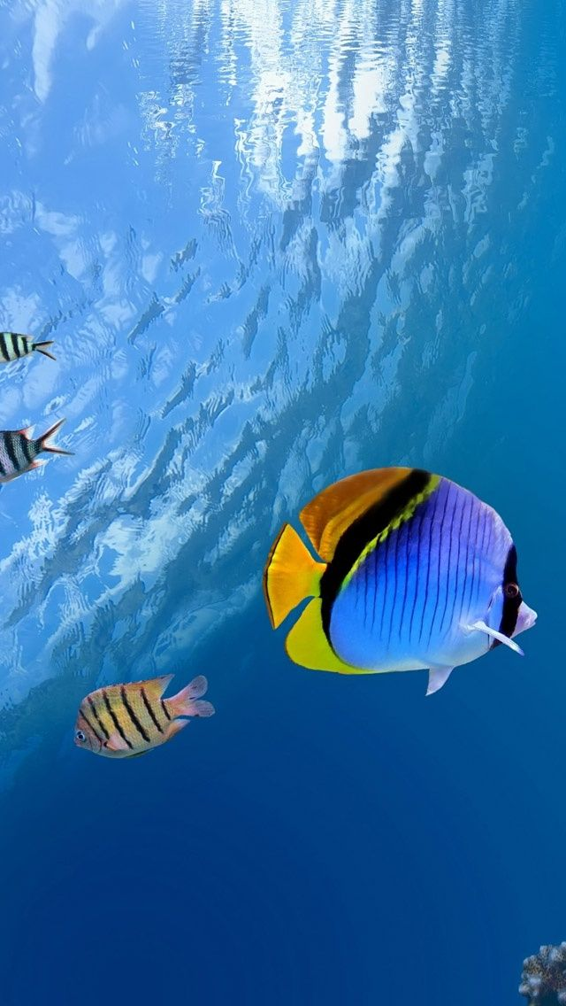 Colorful tropical fish at the Great Barrier Reef, Australia.