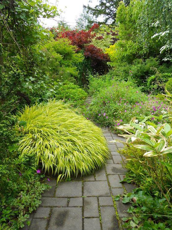 Beautiful Japanese forest grass ( Hakonechloa), great shade plant