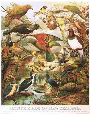 Native Birds of NZ x Pack of 5 Posters
