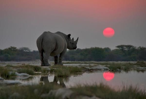 """etosha place of dry water essay The etosha pan which the park is named after is approximately 6 000km² in size in the language of the ovambo people, etosha means """"place of dry water"""" or """"large white place"""" dinner/bed/breakfast at taleni etosha village/toshari inn or similar."""