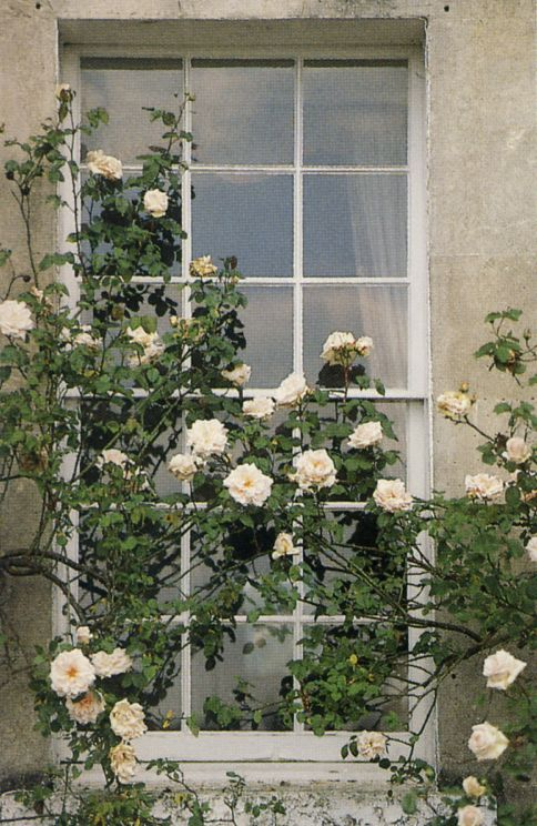 Georgian window and rambling roses....what's not to love