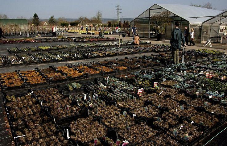 Den ersten großen Ansturm ...  verzeichneten heute die Baumärkte, Gartencenter und Baumschulen. Das Wetter und der für viele freie Samstag waren ja auch geradezu wie geschaffen für die Gartenfreunde. Auf zum fröhlichen Gärtnern. :-)