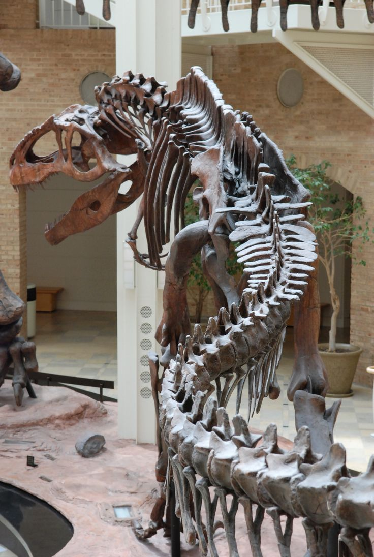 Best Dino Stuff Images On Pinterest - Best history museums in usa