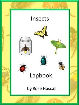 Insect: Insects Math/Literacy Lapbook Autism,Preschool,Kindergarten, Special Education. Most students love a hands-on approach to learning. A lapbook is a great hands on project. The activities in this Insect Lapbook are common core aligned.
