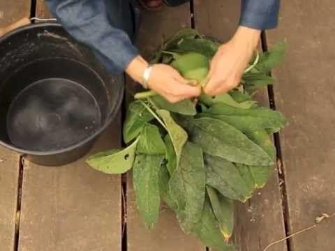 Les purins d'orties et de consoudes - Les purins d'orties et de consoudes sont les meilleurs engrais et répulsifs naturels, apprenez tous les gestes de fabrication et plus encore sur http://jardinierepartageuse.fr/