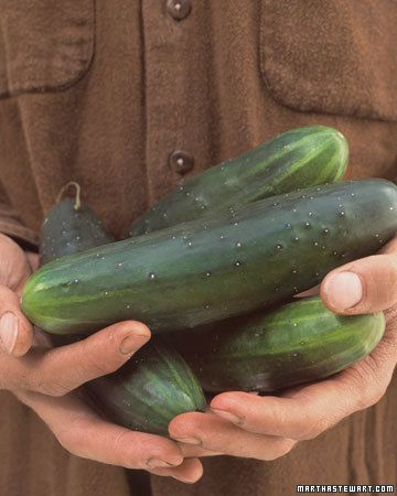 Container variety cucumbers - super easy to grow: Garden Ideas, 13 Easy To Grow, Producing Crisp, Cucumber Cucumis, Bright Green Fruits, Bush Champion, Easy To Grow Vegetables