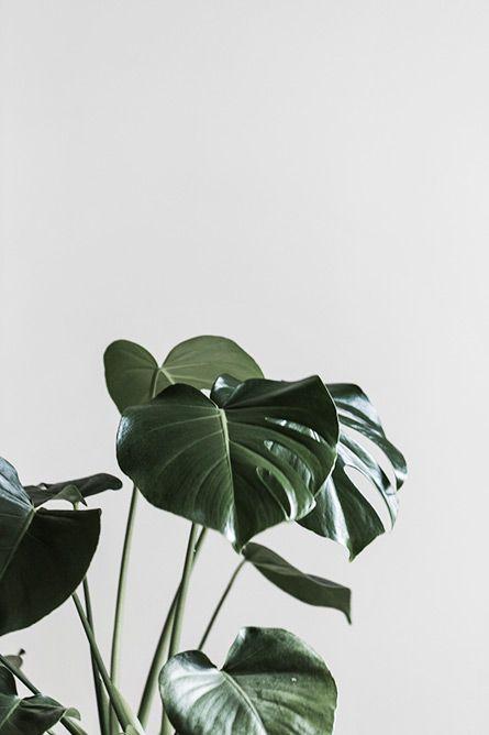 Plantes vertes / plants // Greenery / Nature lovers // Greenlife  Urban Jungle