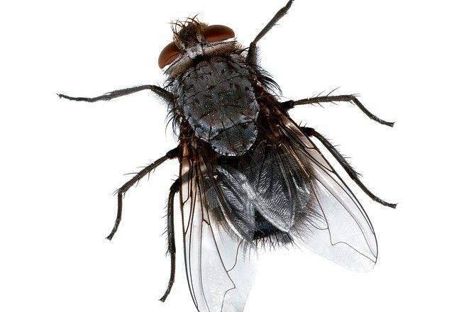Les 25 meilleures id es de la cat gorie piege a mouche maison sur pinterest piege mouche - Comment chasser les mouches ...