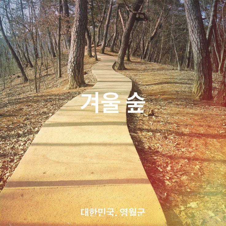 올초 강원도 영월의 겨울숲