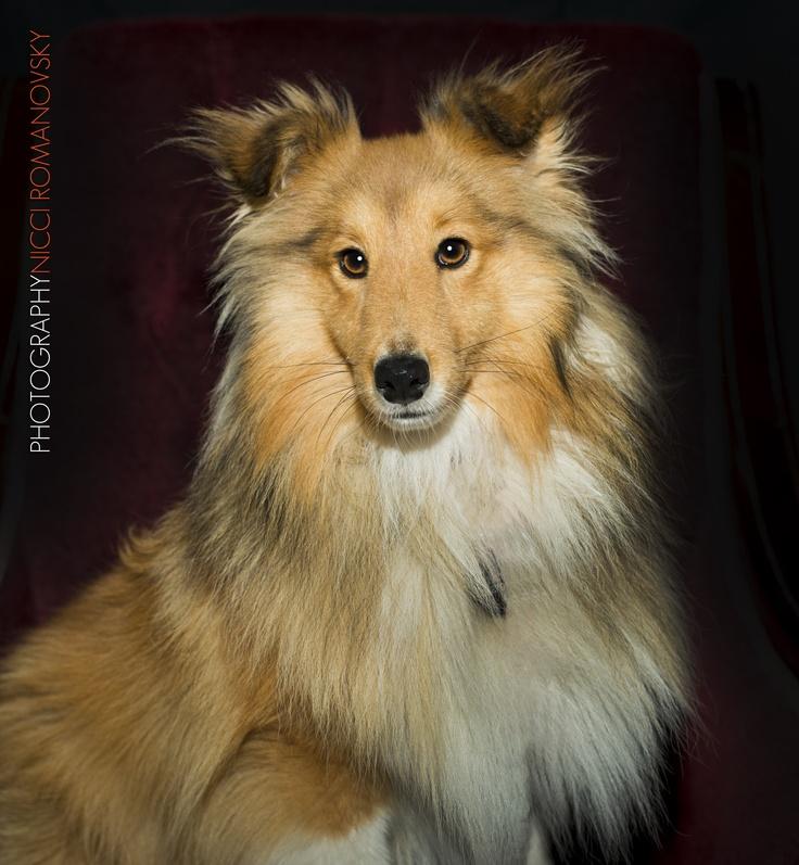 Pet Photography by Nicci Romanovsky  www.shotbynicci.com