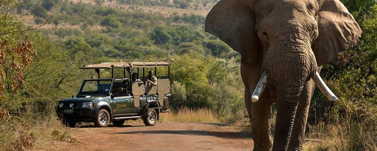 5*Game drives to experience the Pilanesberg National Park with Figasa qualified Rangers.