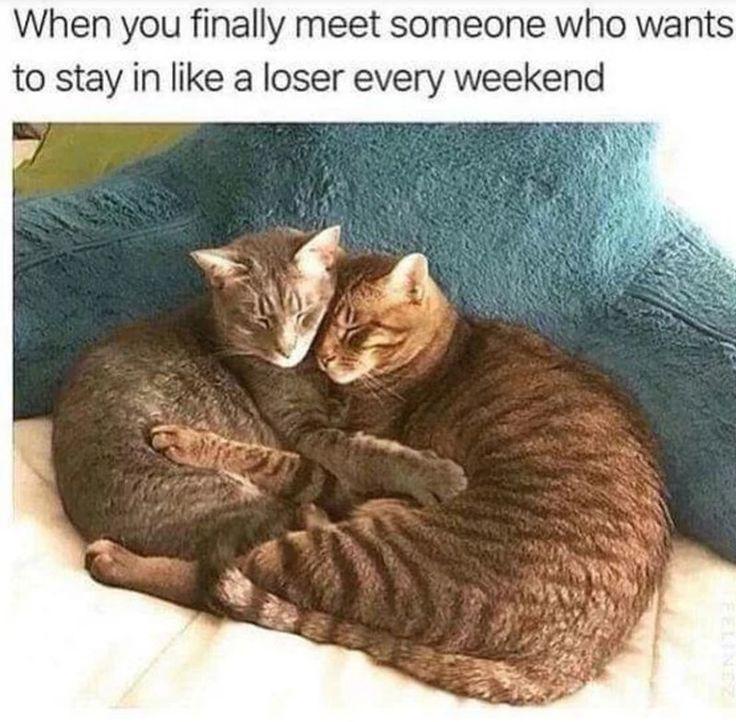 Eine Auswahl an niedlichen und lustigen Tiermemes (30 Memes)