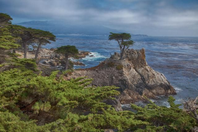 The Lone Cypress on the 17-Mile Drive. Photo Credit: ©2011 Betsy Malloy Photography. How to Make the Most Out of Carmel's 17-Mile Drive: 17-Mile Drive Visitor Guide