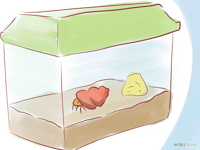 Tell if a Hermit Crab is Sick Step 3.jpg