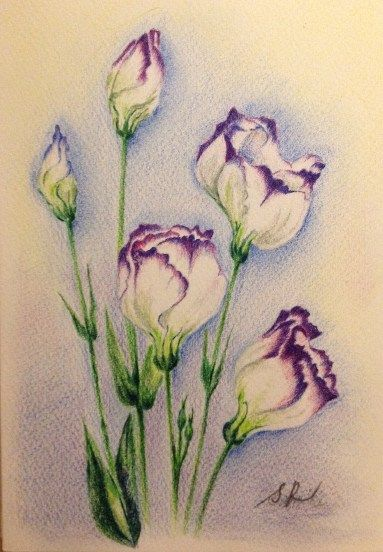 colored pencil drawings of flowers   This summer is really hot,hot,hot!