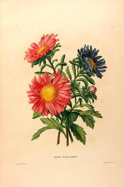 Études de fleurs et de fruits : - Biodiversity Heritage Library. Image from the most-viewed Flickr album from Chicago Botanic Garden, Lenhardt Library. http://biodiversitylibrary.org/page/48344829. #BHLat10