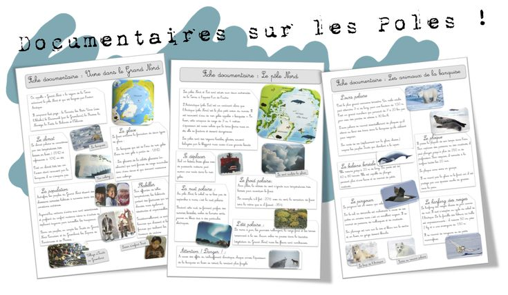 Documentaires le grand nord animaux livres and album - Animaux pole nord ...