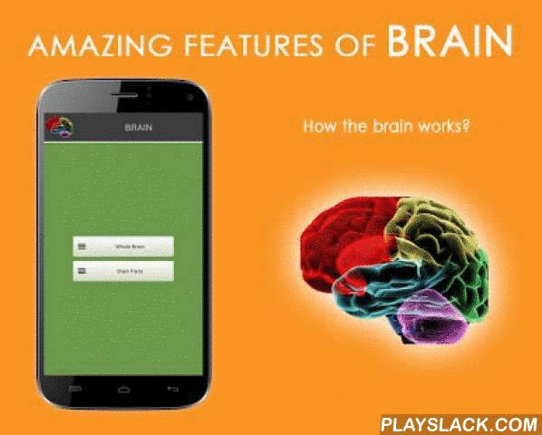 HUMAN BRAIN (PARTS-FUNCTIONS)  Android App - playslack.com ,  Welcome to explore the structure and functions of the human brain.This application gives you information about the brain parts and functions. You can find colorful parts of the brain. How the brain works? What are the brain's functions? Learn everything about brain. We've put together very useful information about the brain, parts and functions for you.Also buying ad-free(Plus) version, you can use with an impressive interface…