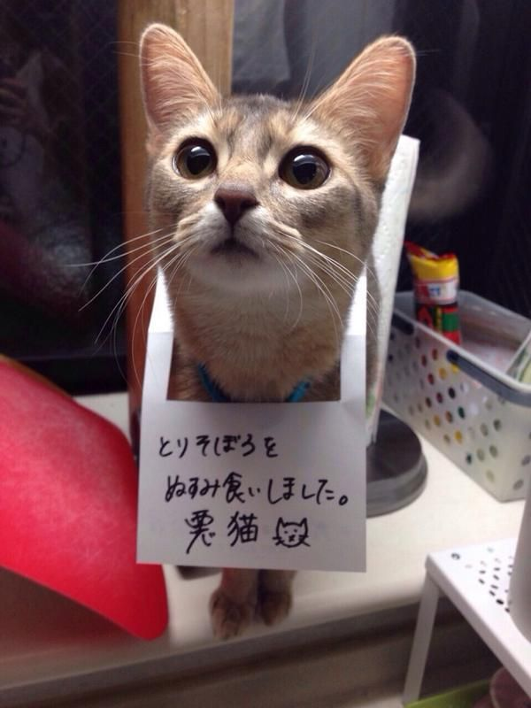 """Inmi Choo The sign says """"I stole and ate (cooked and seasoned) chicken ground. Naughty kitty."""
