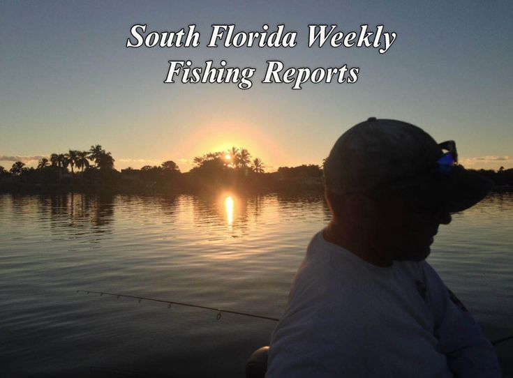 If you're planning a fishing trip in South Florida, you'll want to check on  the weekly fishing reports for South Florida from The Palm Beach Post #southflorida #fishing #saltwaterfishing #freshwaterfishing #crappie #snook