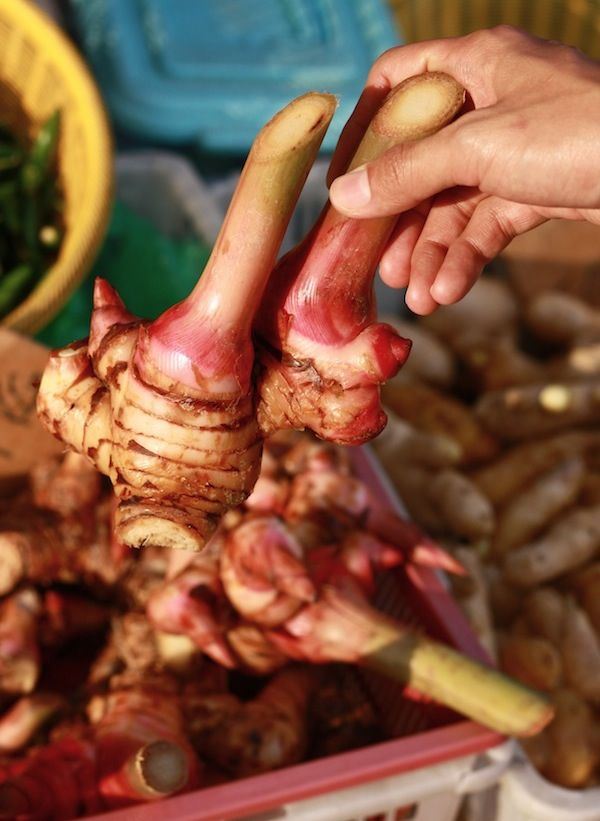 90 best malaysian spices cooking ingredients and local for Galangal living