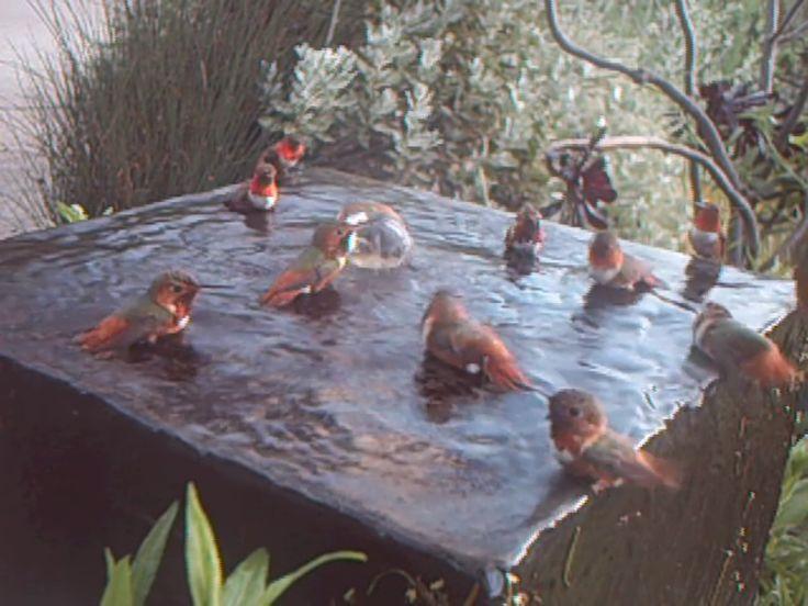 8 Best Images About Hummingbird Amp Bird Baths On Pinterest