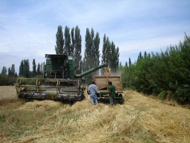 El Calvario y su típica cosecha de trigo.