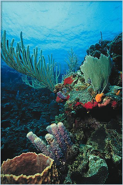Glover's Reef In Belize Is Designated As A World Heritage