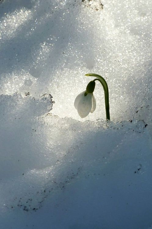 """""""If Winter comes, can Spring be far behind?"""" 'Ode to the West Wind' By Percy Bysshe Shelley."""