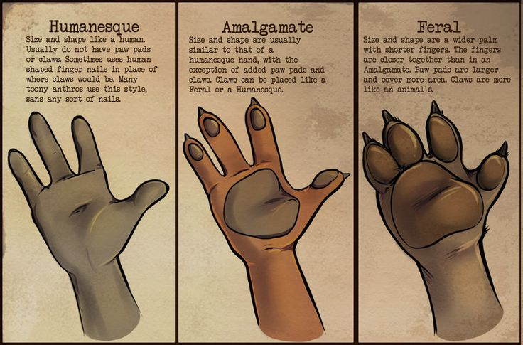 Anthro Hands by *coffinberry on deviantART | Hands and ...