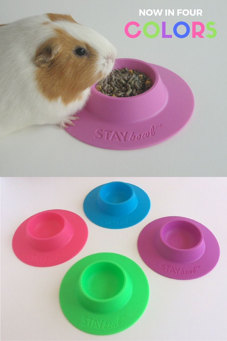 STAYbowl Tip-Proof Bowl for guinea pigs and other small pets is now available in four bright colors! This bowl prevents spills and mess, and will literally pay for itself. Plus, it looks great in the cage!