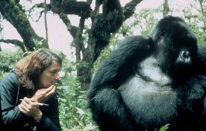 Dian Fossey is remembered throughout the world for her heroic struggle to preserve, protect and study the mountain gorilla. She founded the Digit Fund (later renamed the Dian Fossey Gorilla Fund International)