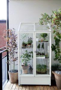 Plantas dentro de una vitrina