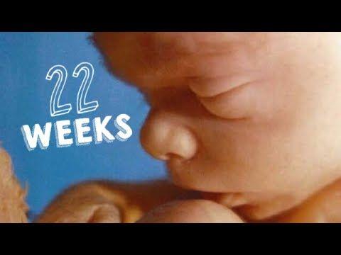 SEMANA 22 DE EMBARAZO | 22 WEEKS PREGNANT | 6 MESES DE EMBARAZO | DESARROLLO DE TU BEBE - YouTube