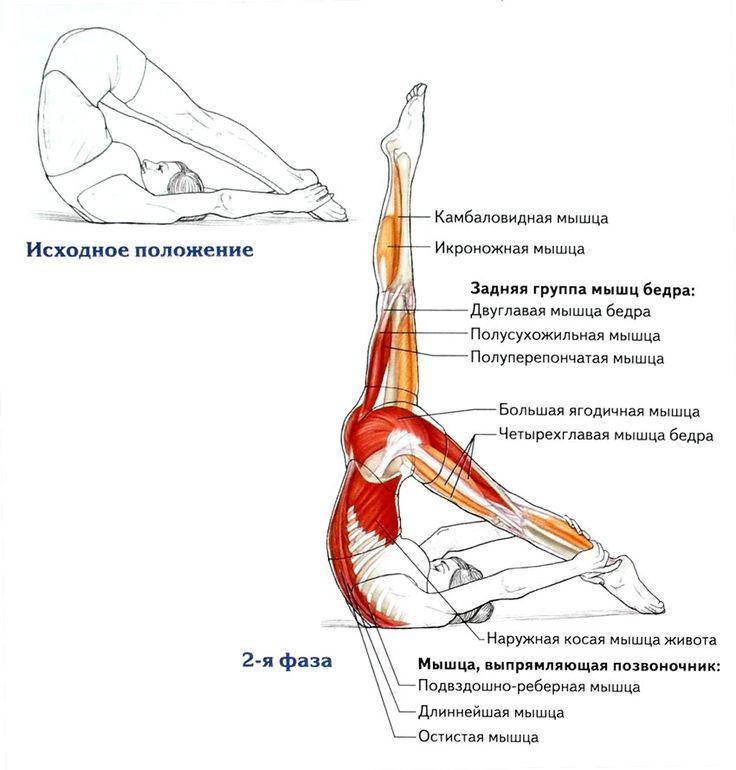 Пилатес упражнения для начинающих — SportWiki энциклопедия