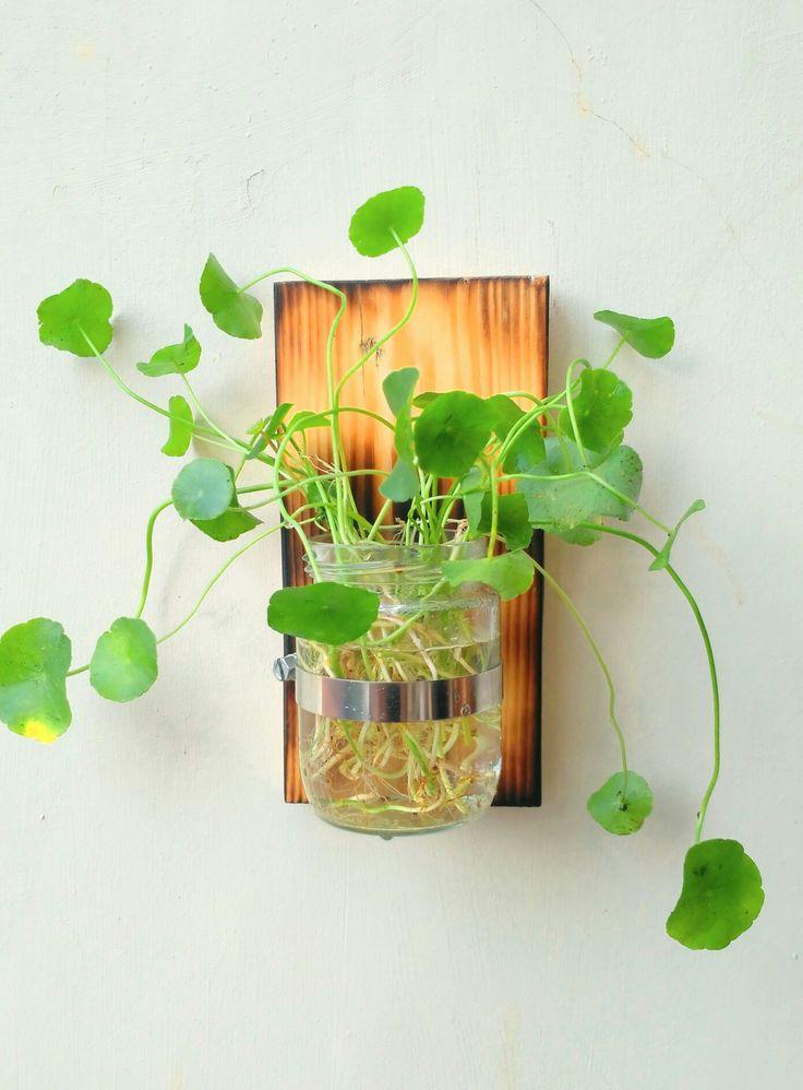 Recyle mason jar for hanging plant  #palletideas #masonjar