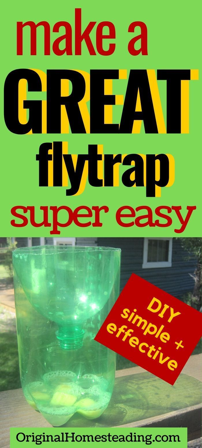 Simple Homemade Fly Trap DIY Project that Works! in 2020