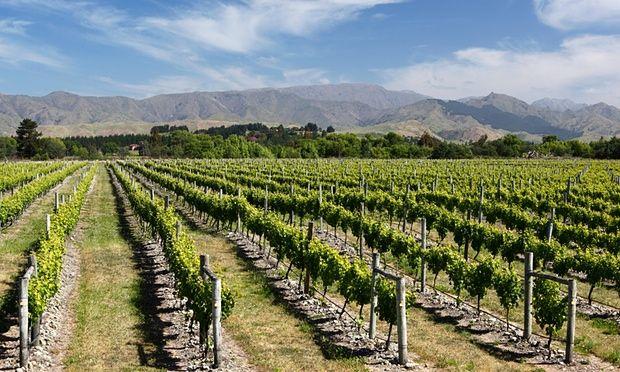 Top 10 Bike-Friendly Wine Routes ... Renwick, near Blenheim, Marlborough, New Zealand