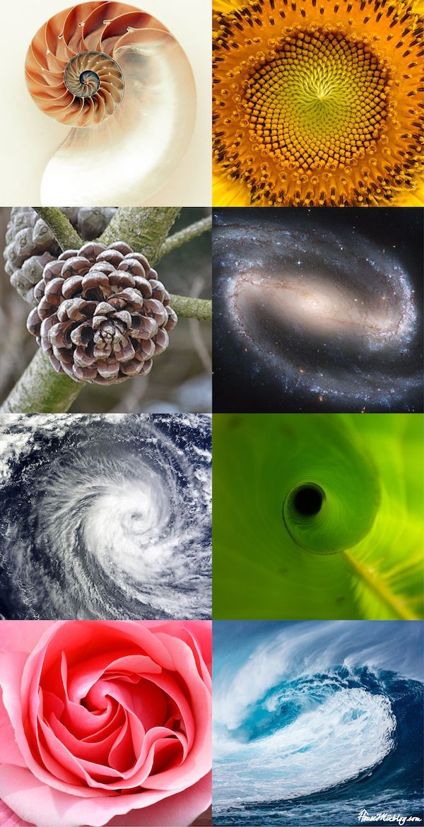 The 25+ best Golden ratio in nature ideas on Pinterest Fibonacci - geometric sequence example