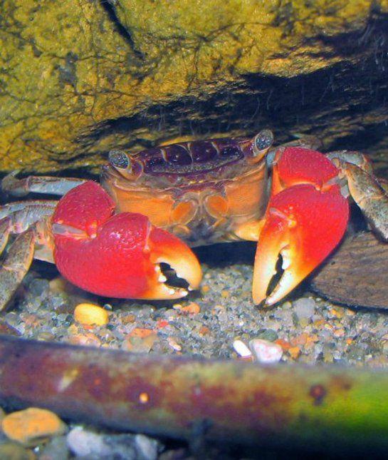 10 non fish aquarium pets small pets tips advice mom for Small pet fish