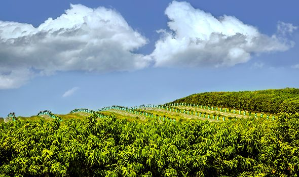 Coffee country: Skybury Tropical Plantation, Mareeba