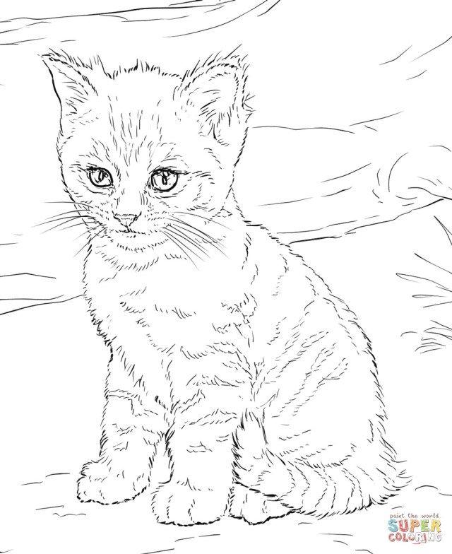 Kitten Christmas Coloring Page Google Search Szinezolapok