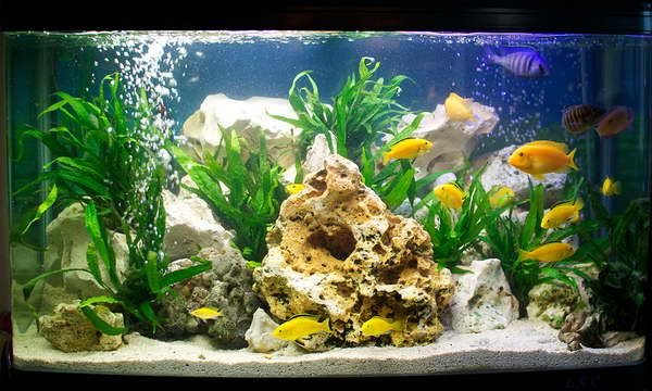 Should i do white sand in my tank fishes pinterest for Sand for fish tank