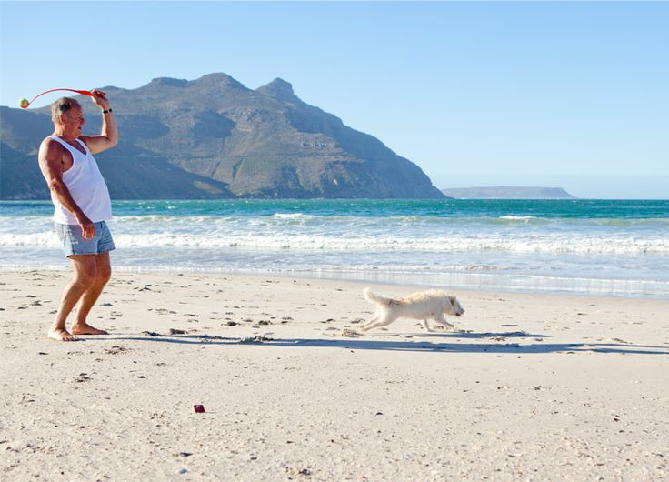 Hout Bay - it's a dog's life