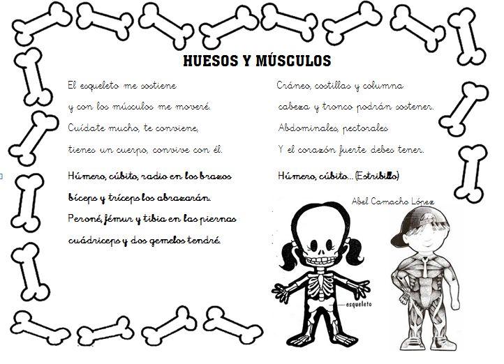 Huesos y músculos Aprender los huesos y los músculos nunca había resultado tan fácil! ¿Curioso verdad? A través de esta poesía sobre huesos y músculos,vuestros niños podrán aprender de manera divertida y dinámica los músculos y huesos de el cuerpo humano.
