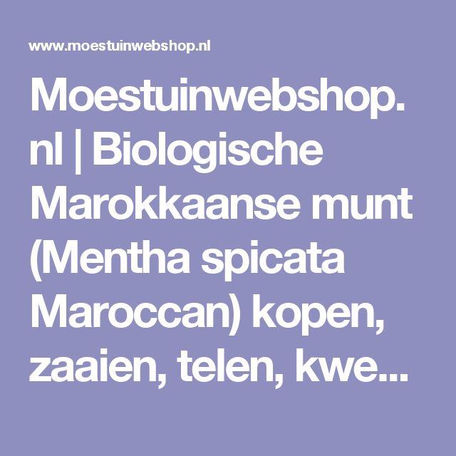 Moestuinwebshop.nl | Biologische Marokkaanse munt (Mentha spicata Maroccan) kopen, zaaien, telen, kweken, planten, bemesten en oogsten