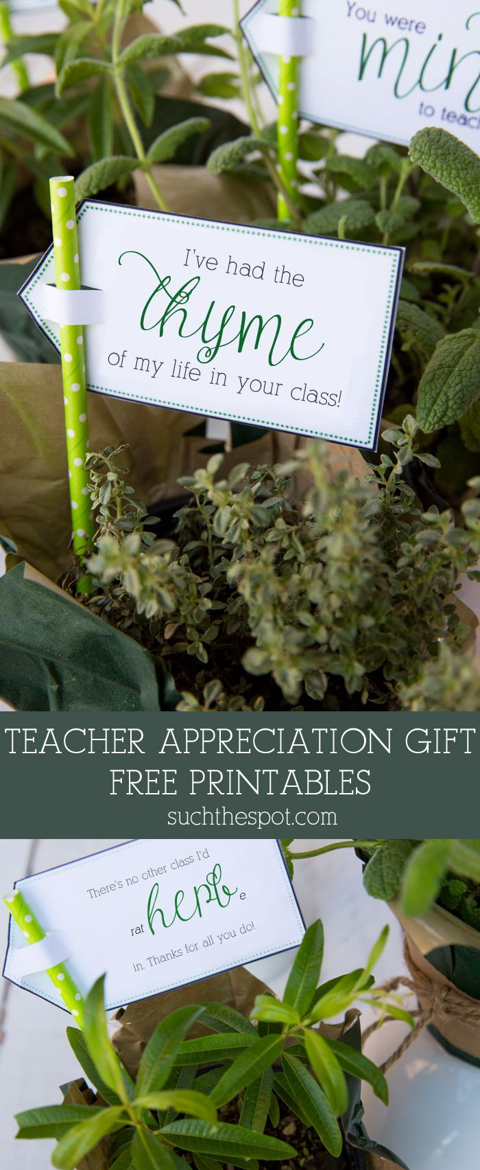 Fresh Potted Herbs ~ Teacher Appreciation Gift & Free Printable | SuchTheSpot.com