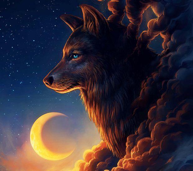 #wolf #animais